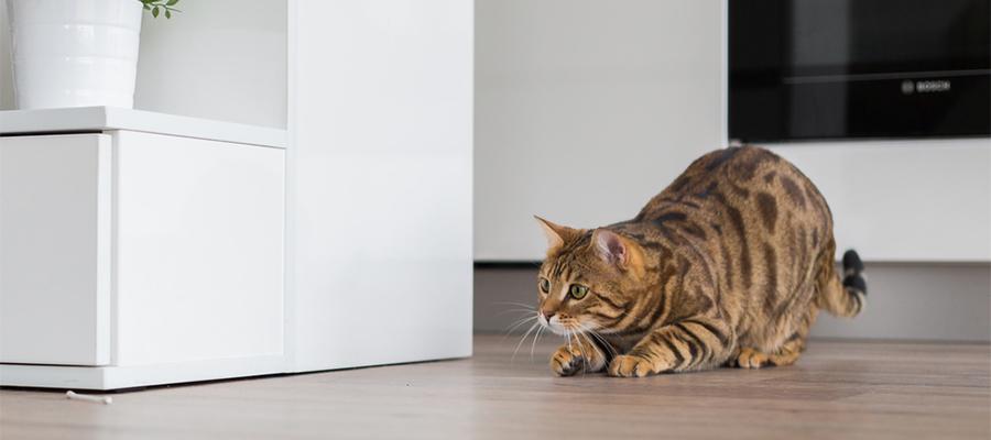 安全に配慮して! 猫と暮らす家づくりのポイント